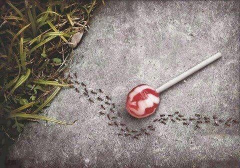 aspartamo y hormigas