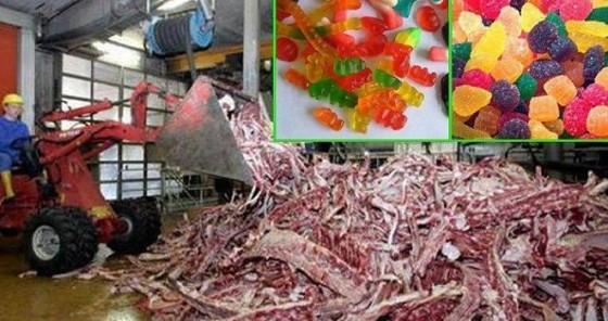 Gelatina-deshechos animales