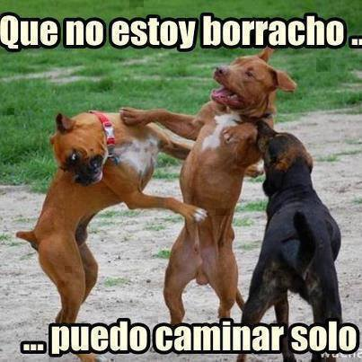 Resultado de imagen para chistes de perros